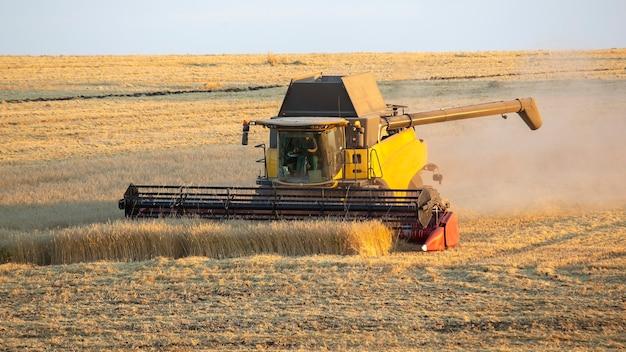 Комбайн убирает пшеницу в поле. подготовка зерна. агрономия и сельское хозяйство.