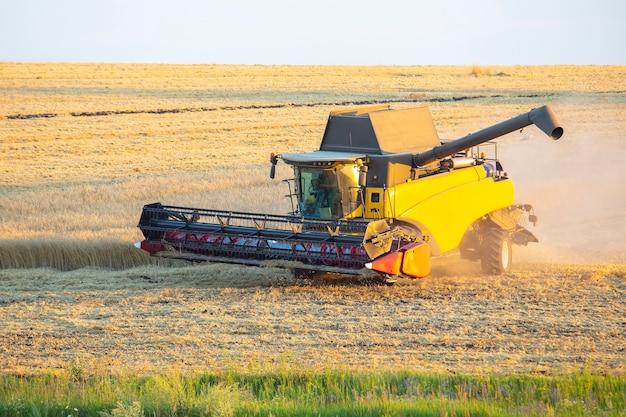 Комбайн убирает пшеницу в поле. подготовка зерна.