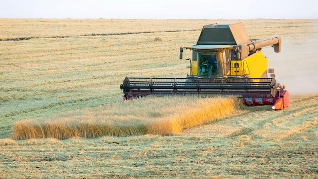 수확기가 들판에서 밀을 수확하고 있습니다.