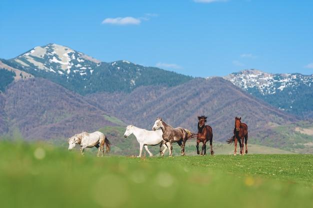山の中の馬の群れ。青い空を背景に牧草地で放牧している馬