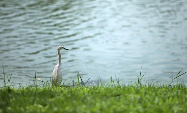헤론은 호수 기슭에 앉아