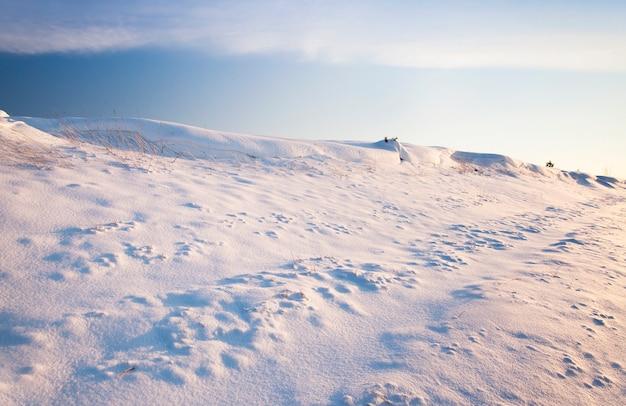 嵐の後に降った雪に覆われた草のある丘