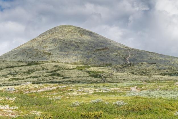 언덕은 노란색 이끼로 덮여 있습니다. 국가 관광 루트 rondane, 노르웨이에서보기