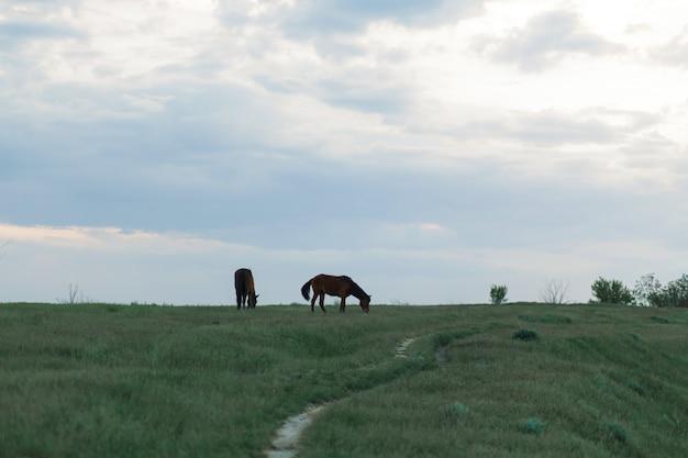 Лошадь пасется на зеленой лужайке в пасмурную погоду. облачное небо.