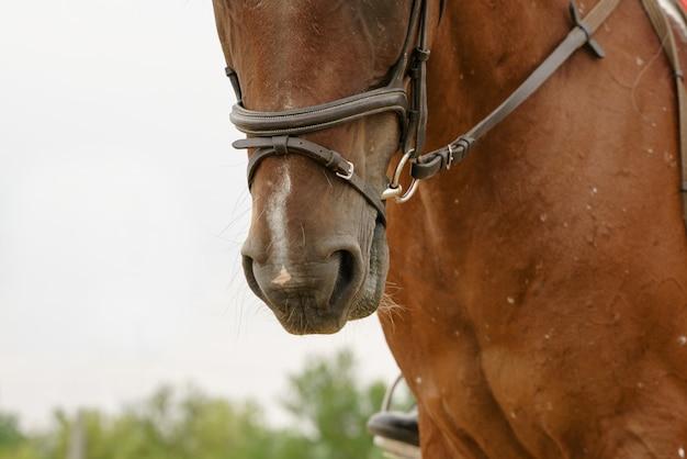 Лошадь в амуниции под всадником на фото крупным планом