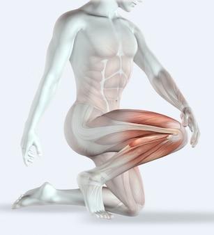 筋肉のマップと痛みにひざを保持している男性像のレンダリング3d