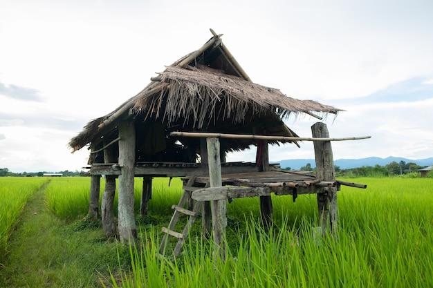 小屋は亜鉛でできています。田んぼの小屋。