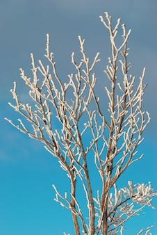 푸른 하늘이 얼음 덮여 지점.