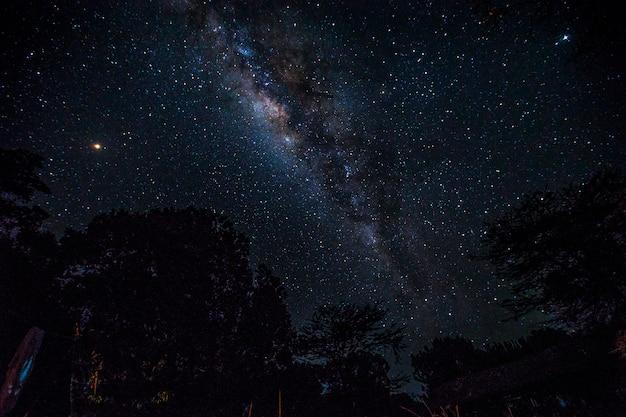Впечатляющий млечный путь и деревья в национальном парке масаи мара. кения