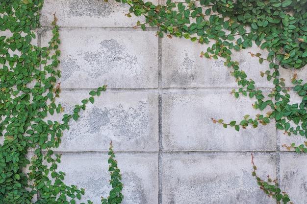 Плющ на стене из кирпичных блоков в качестве фона.