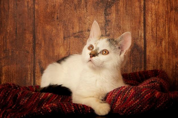 子猫はニットのスカーフの上に横たわっています
