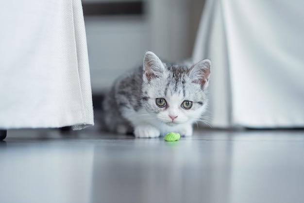 Котенок играет с голубой лентой дома
