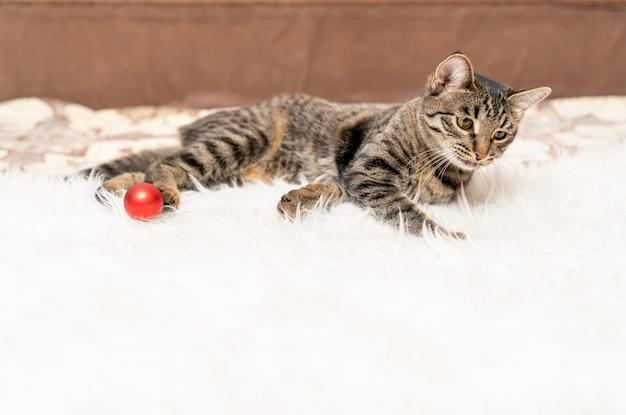 새끼 고양이는 하얀 모피 침대에 누워 빨간 공을 가지고 노는