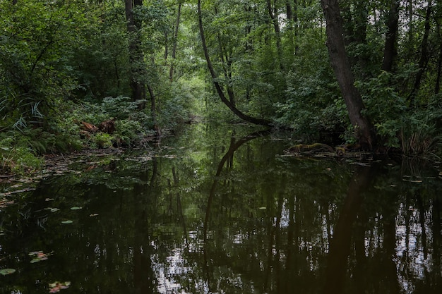 湖は森の茂みにあり、美しい自然の景色を眺めることができます。