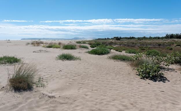 Пейзаж морского пляжа
