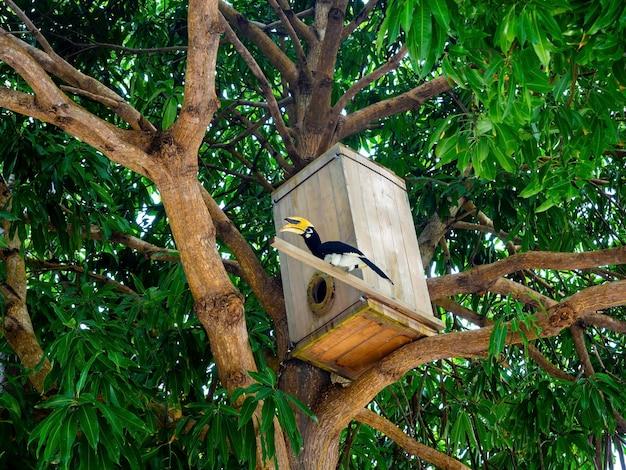 黄色い頭と大きなくちばしを持つ大きなサイチョウが、木の枝にある木造家屋の前に立っています。