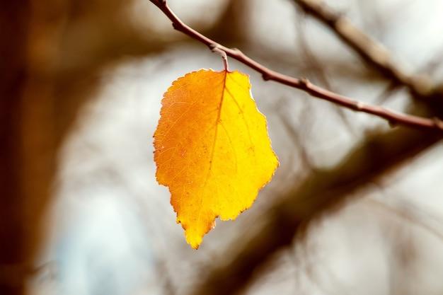木の枝の最後の黄葉