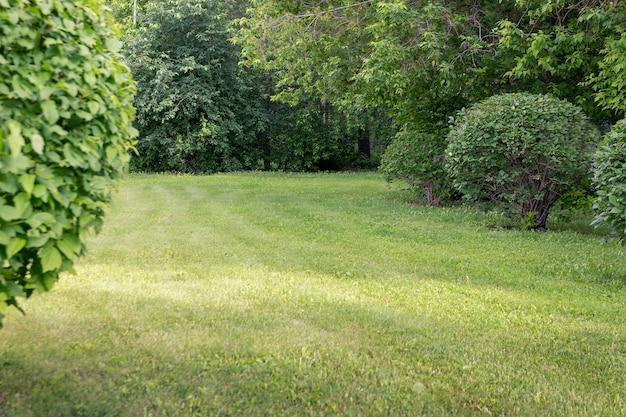잔디밭은 깎아낸 둥근 덤불과 나무로 둘러싸여 있습니다. 공공 공간 조경