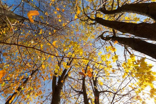 공원 나무에서 나뭇잎이 노랗게 물들었습니다. 가을 시즌의 사진.