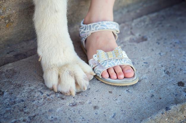 子供の足は大きな犬の足の近くが近くにかかります。犬と人の友情の概念。