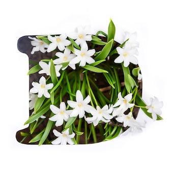 Буква d английского алфавита маленьких белых цветов хионодокса