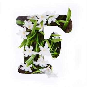 Буква f английского алфавита маленьких белых цветов хионодокса