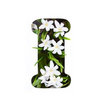Буква i английского алфавита из маленьких белых цветов хионодокса