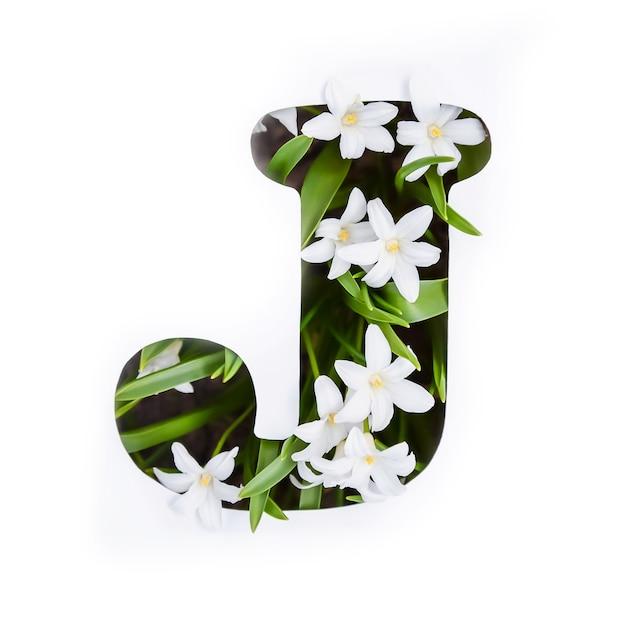 Буква j английского алфавита маленьких белых цветов хионодокса