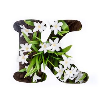 Буква k английского алфавита маленьких белых цветов хионодокса