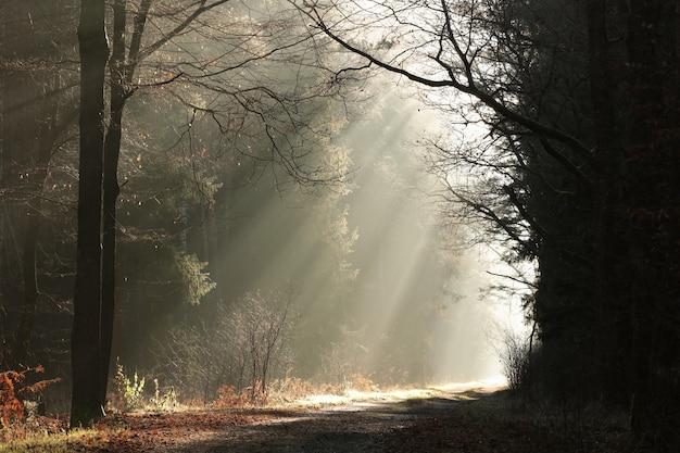 안개가 자욱한 날씨에 떠오르는 태양의 빛이 숲길에 떨어집니다.