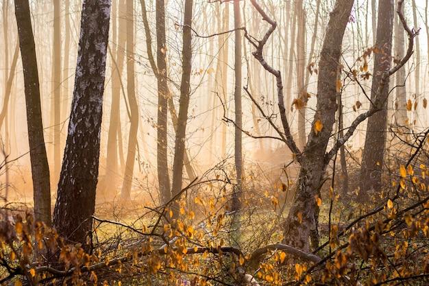 秋の森の霧の中を太陽の光が差し込む