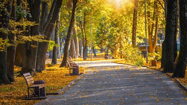 太陽の光が木の葉を透過します