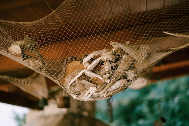 바다 거주자의 팔다리 게 가재 홍합은 장식으로 천장 아래에 메쉬에 매달려