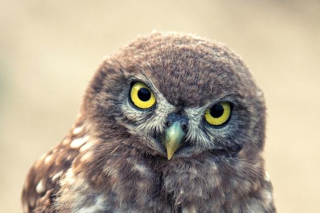 Маленькая сова стоит на красивом фоне. портрет