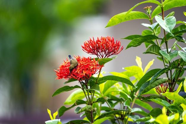 Маленькая крошечная птичка стоит и ест плодолистик из красного колючего цветка.