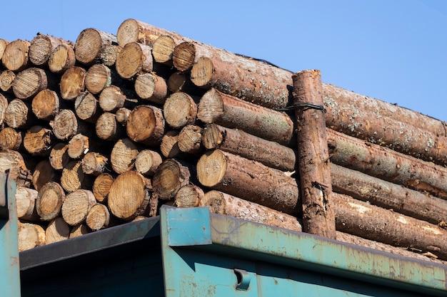 丸太の松は貨物列車の馬車にあります。木材輸送。