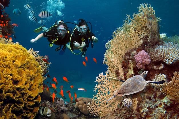 사랑하는 부부는 바다의 산호와 물고기 사이에서 다이빙합니다.