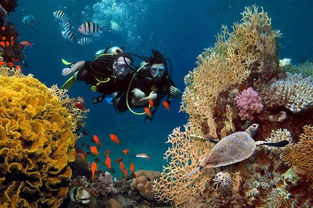 愛情のあるカップルは海のサンゴや魚の間でダイビング