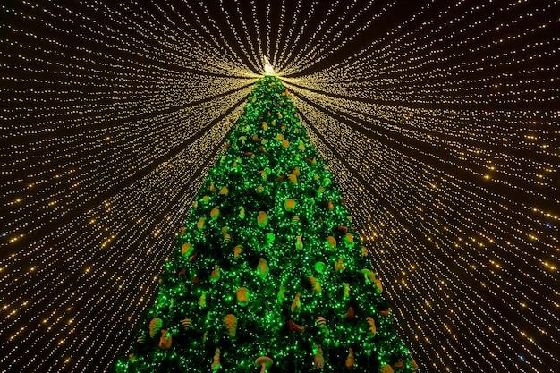 キエフのソフィア広場にあるウクライナのメインのクリスマスツリー。キエフのクリスマスツリー