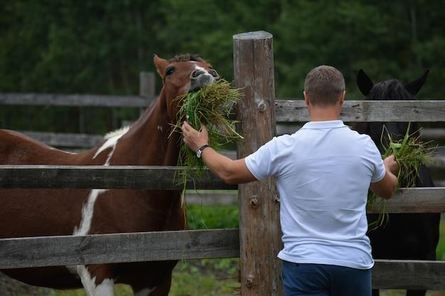 男は馬に草を食べさせる。