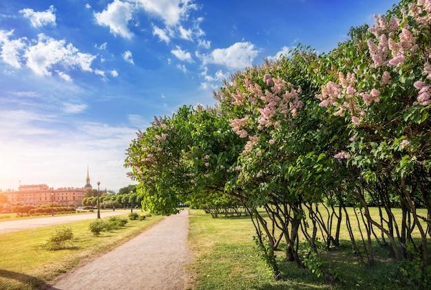 Марсово поле в санкт-петербурге с видом на михайловский замок и кусты розовой сирени. Premium Фотографии