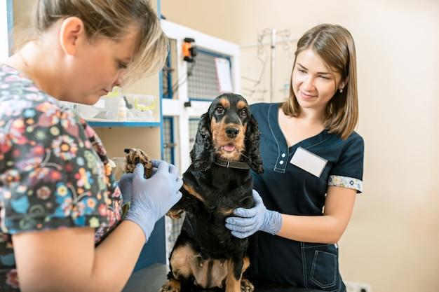 Медицина, уход за животными и люди концепции - собака и врач-ветеринар в ветеринарной клинике