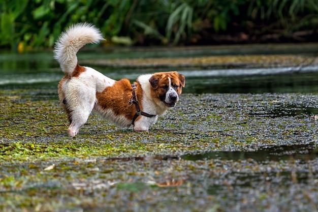 Собака смешанной породы в коричневом цвете с белым цветом