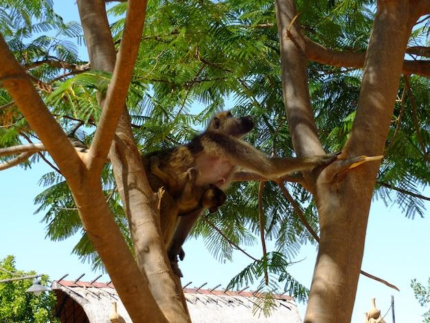ジンバブエのリビングストンにいるサル