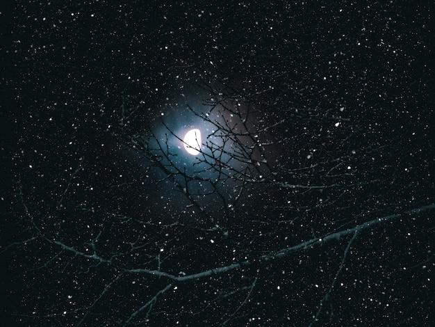 Луна светит сквозь ветви в снегопад ночью.
