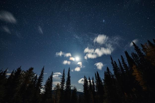 松の森の青い空に星空と月