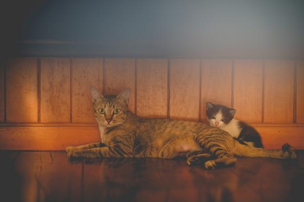어미 고양이는 나무 바닥에 새끼 고양이와 함께 바닥에 기대어 있습니다.