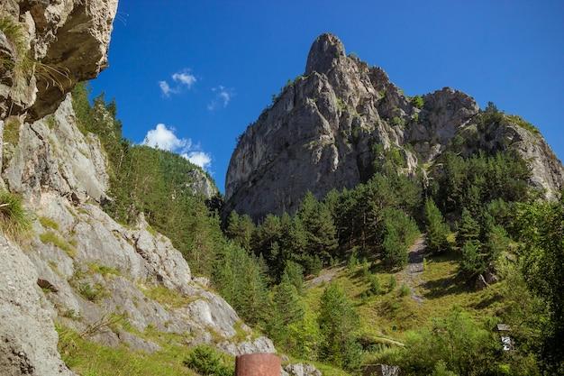 Горная скала под деревьями в солнечный день. румынская гора недалеко от ущелья биказ. карпаты редкие массивные и сосновые леса пейзаж румынской сельской местности летом.