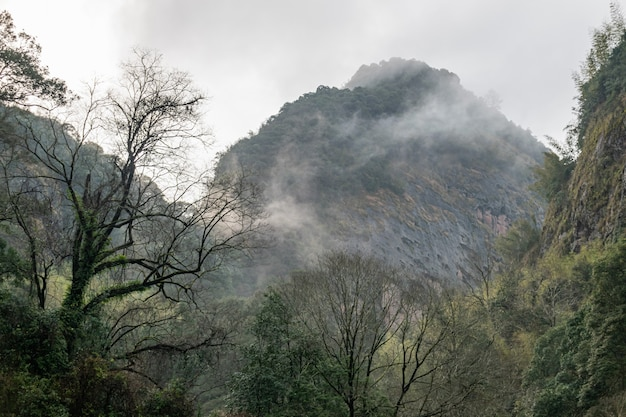Горы покрыты лесами