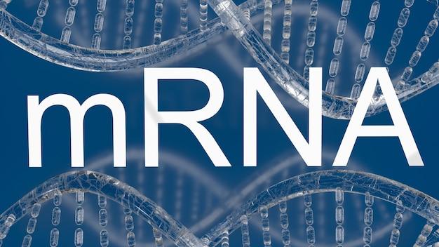 의료 또는 발발 개념 3d 렌더링을위한 mrna 또는 메신저 ribonucleic acid 흰색 텍스트